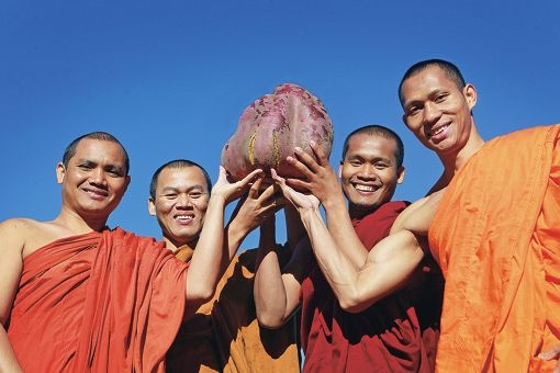 Cambodian monks Oeun Sam, Thai Chheouy, Vichet Hang and Chheang Sophal with the giant sweet potato. Picture: Bruce Hunt www.communitypix.com.au d402538