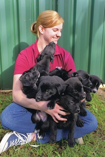 K9 manager Jordan Podmore with the 10 rescued puppies. Picture: Jon Hewson d403918