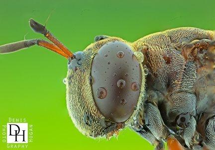 Denis Hogan's macro image of a dragonfly.