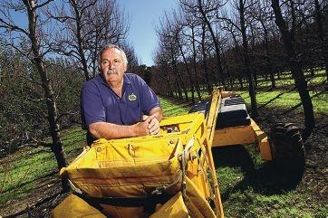 Under pressure: Perth Hills orchardist Peter Casotti. Picture: Marcelo Palacios www.communitypix.com.au d401462