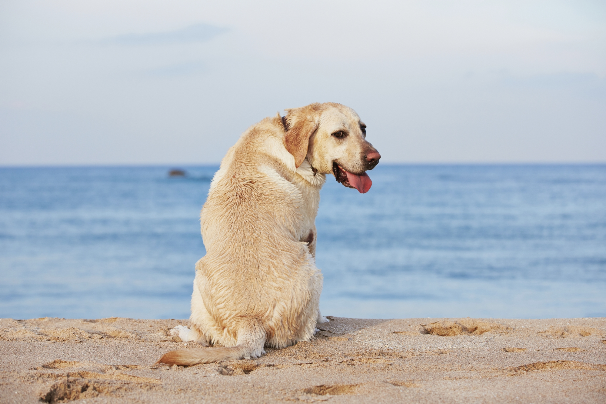 A new dog beach has been planned for the City of Wanneroo. Picture: file pic
