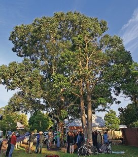 Guildford residents opposed to two local trees being chopped down recently gathered at Claymore Close.