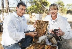Department of Agriculture and Food officers Rob Manning and Darlene Mallett check a beehive for disease and hive pests.