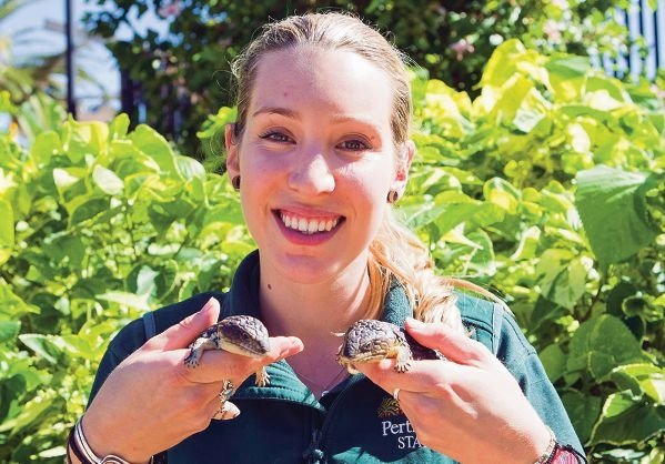 Perth Zoo reptile keeper Emily Trainer with the unexpected but safe arrival of the two baby shingleback skinks.