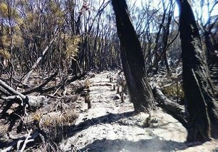 Almost 140m of the Jim Gordan VC Trail was burnt.