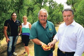 Fruit growers Brett DelSimone, Wilma Byl and Peter Casotti meet with Opposition Agriculture spokesman Joel Fitzgibbon.