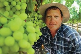 Belhus table grape grower Tony Kundid expressed concerns over the impact imported grapes could have on his harvest.