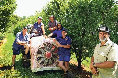Peach growers Danny DiMarco, Eric Ghilarducci, John DiMarco, Leo Caccetta, Steve Ghilarducci and Carlo Caccetta say they face unsustainable crop losses this season. Picture: Marcelo Palacios www.communitypix.com.au d410651