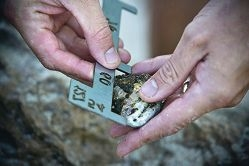 Abalone fishers should use a proper gauge to check their catch is over the minimum 60mm size.