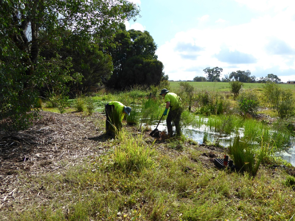 Members of the Green Army working in the Beenyup channel.