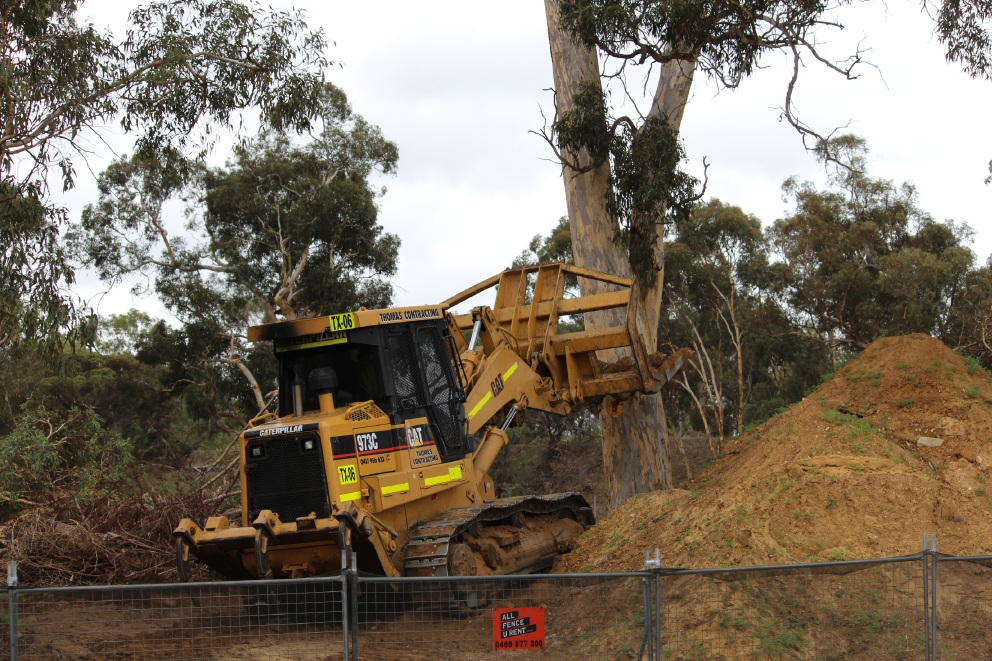 The bulldozer takes on one of the Viveash site's biggest wandoo trees. Picture: J Bianchini