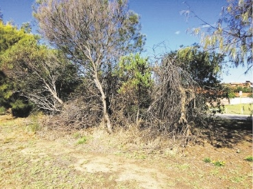 Some of the vegetation that was cleared from the median strip along Warwick Road in Duncraig.
