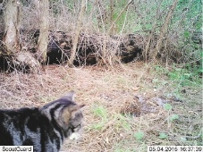 A feral cat photographed near Neil Hawkins Park.