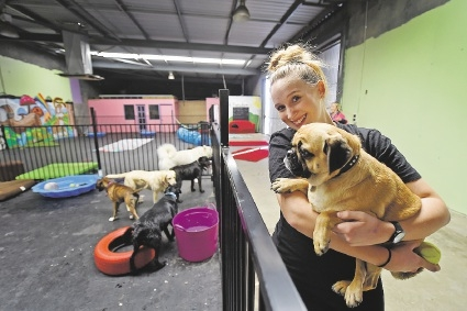 Take peek at service for pampered pooches
