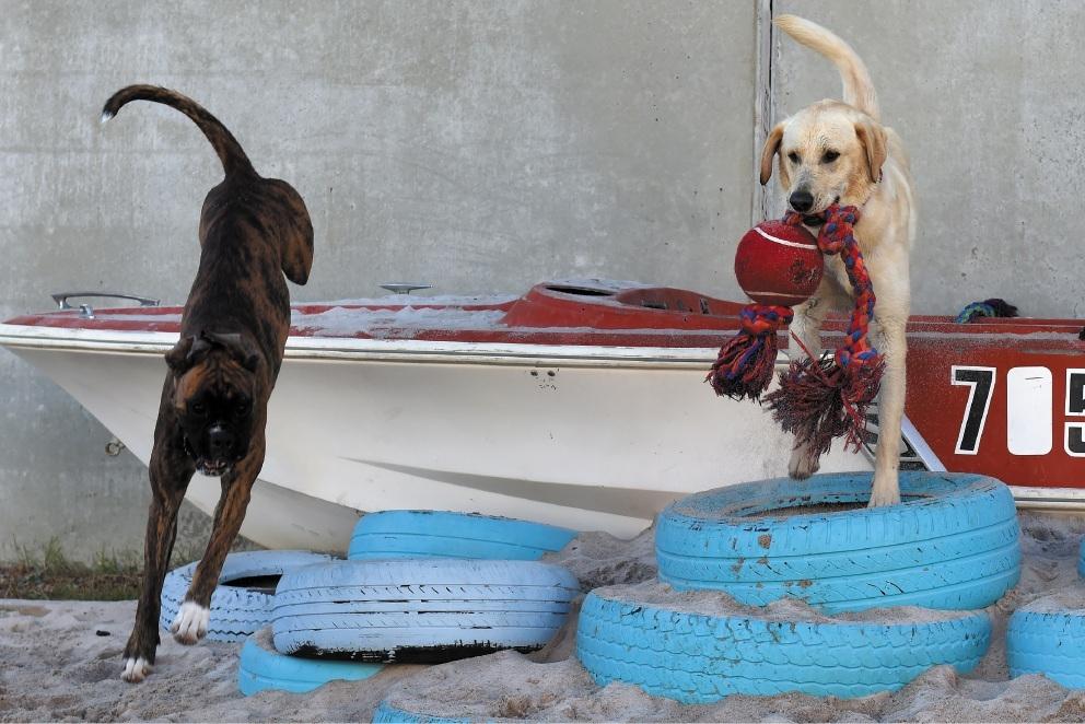 Alice Armistead shows Hunter the facilities at Peekaboo Dog Wash.