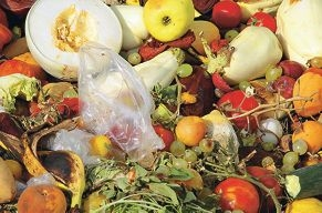 scraps of rotten fruit and vegetables