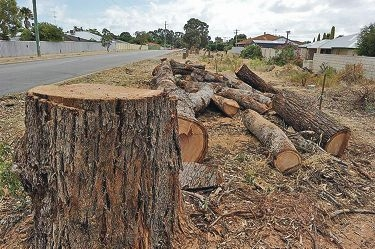 Some of the trees near Lakes Road that the City of Mandurah cut down as part of road widening works.