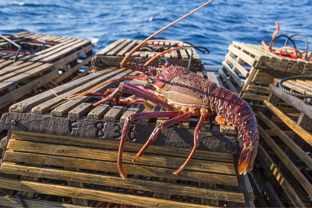 Fisheries minister warns against lobster theft