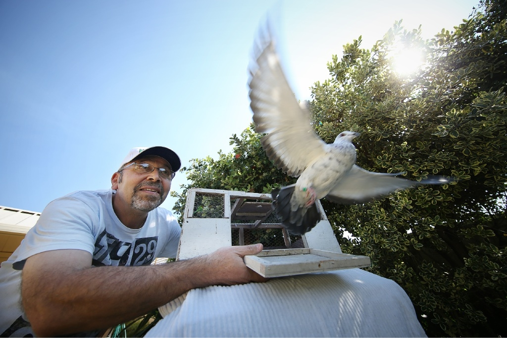 Pigeon racer Joe Raheb says it's a sport that everyone can get involved in.  Picture: Andrew Ritchie www.communitypix.com.au   d444681