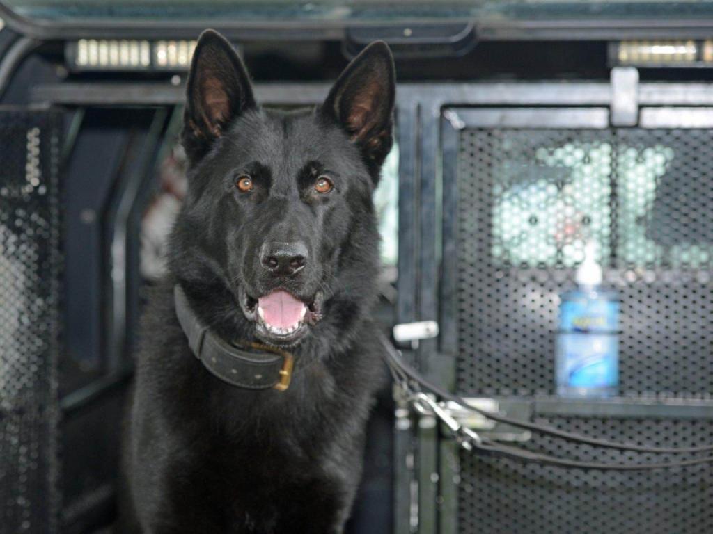 Police Dog Nikko.