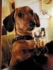 Bertie the Dachshund alerted his owners to a fire.