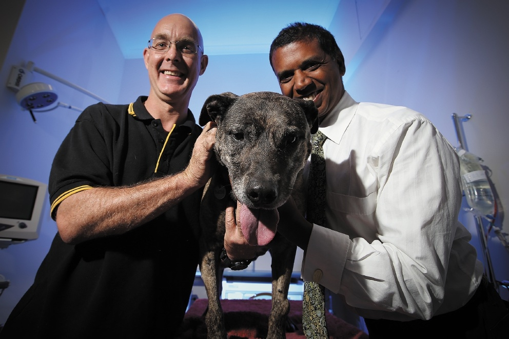 Dave McKinnell with Sandy and vet Ramesh Sivacolundhu.  Picture: Andrew Ritchie www.communitypix.com.au   d442203