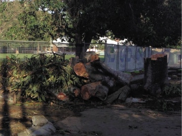 Residents expressed concern about three trees that were cut down at Bassendean Primary to make way for an administration building.