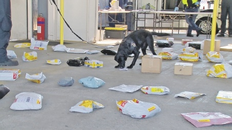 Drug detection dog Diego sniffs out mail at the Australia Post facility at Perth Domestic Airport.