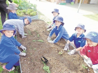 Digging in: Bertram Primary School students hard at work.