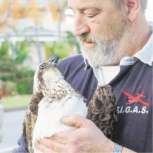 Bill Lambe from WA Conservation of Raptors with Oskarlini.Picture: WA Conservation of Raptors group