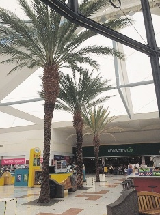 The palm trees that were inside Lakeside Joondalup Shopping City.