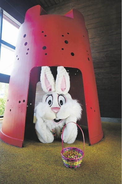 The Easter bunny will bounce into town this week. Picture: Emma Goodwin        d435460