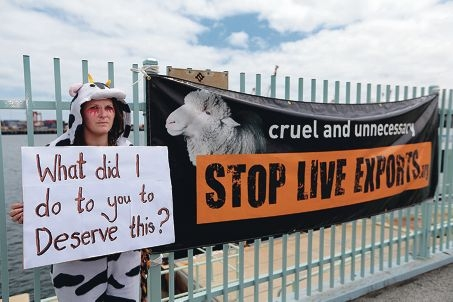 Mippy Valentine, of Fremantle, joins protests against the live export trade.