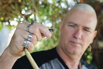 Snake catcher Steve Smartt, of Spearwood, with a dugite. Picture: Martin Kennealey d427368