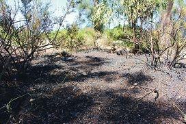 'Suspicious' bushfire quickly extinguished