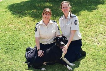 RSPCA inspectors Kylie Green and Amanda Swift with Gilly. Picture: Marcus Whisson www.communitypix.com.au d426620