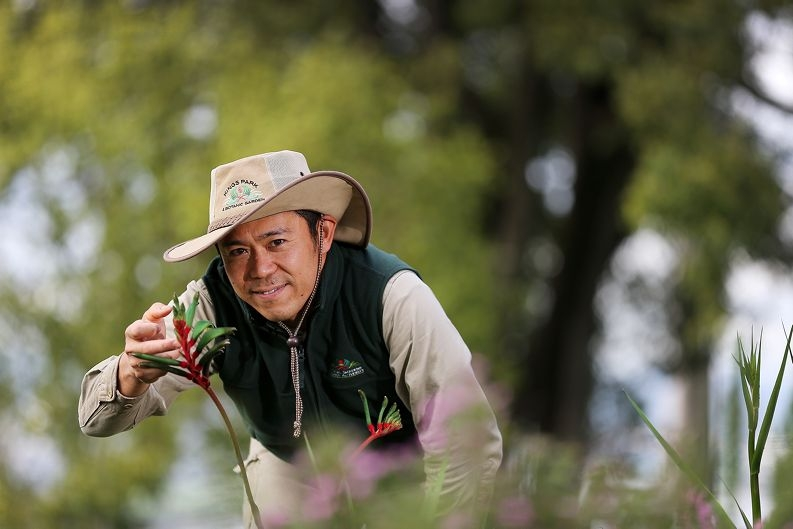 Aki Hiramatsu Kings Park horticulturalist from Willetton, The Kings Park Festival is about to commence and one of the first events is a guided walk through the Botanic Garden which is being presented in Japanese