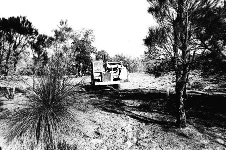 Machinery clears Edith Cowan University Joondalup campus' bushland block prior to building. The campus opened in 1987.