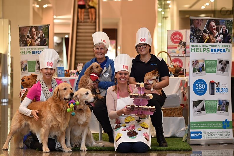 RSPCA fundraising co-ordinator Deida Nicholls with Peppi and Bella, RSPCA volunteer Hazel Doyle with Teddy, RSPCA event co-ordinator Molly Haworth with some cupcakes and RSPCA senior animal attendant Hannah Dreaver with Candy. Picture: Marcus Whisson www.communitypix.com.au d423318
