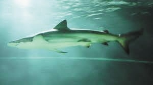 The Department of Science wants tests on a new shark barrier.