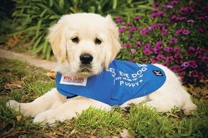 Seeing eye dogs provide many benefits to blind people.