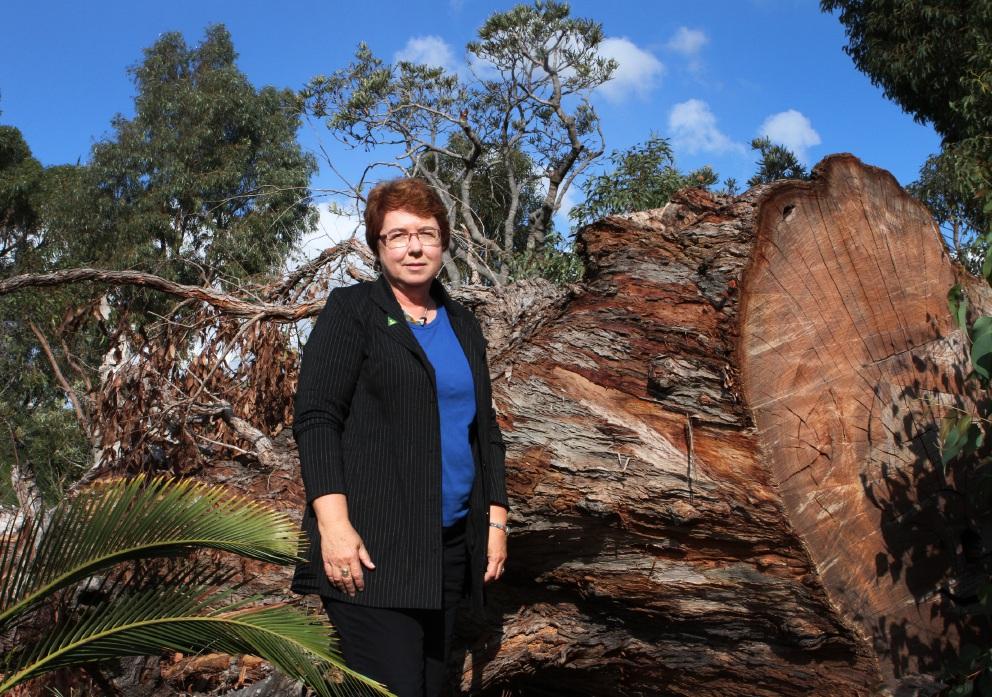 Greens MLC Lynn MacLaren. Picture: Robin Kornet    d454512