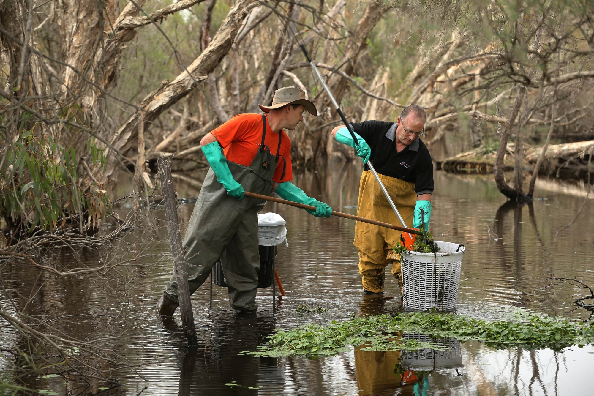 Wilson Wetlands Action Group chairman Russell Gorton and Federal Member for Swan Steve Irons helping to clear the river of hydrocotyle. Picture: Martin Kennealey d420102