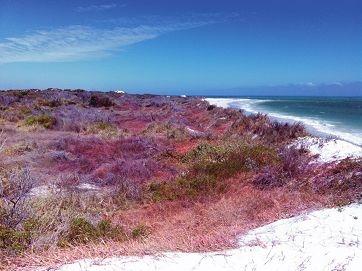A pink sand dune at Cervantes.