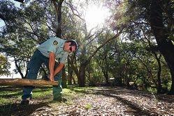 Ranger Matt searching for a deadly 1080 pallet along the Canning River bank at Rushton Park in Kelmscott. Picture: Matt Jelonek d419387