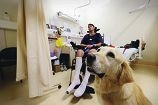 Therapy dog Sophie with patient Mitchell Cleary. d416874