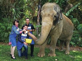 Chef Anna Gare, comedian Sam Longley and chef Herb Faust with Tricia the elephant at the launch of Australia's Biggest Morning Tea.