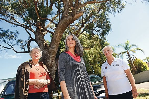 Rita Richards, Rosalind Lewis and Trish Cole in front of the tree that housed a beehive. Picture: Marcus Whisson www.communitypix.com.au d417830