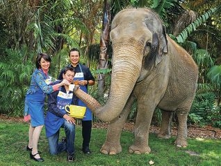 Anna Gare, Sam Longley and Herb Faust with Perth Zoo's Tricia the elephant, as they launch Australia's Biggest Morning Tea. Picture: David Baylis www.communitypix.com.au d417804