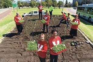 Volunteering WA members Margaret Andrews and Lucia Britto with fellow volunteers and City of Perth parks and gardens workers. Picture: Marcus Whisson www.communitypix.com.au d417909
